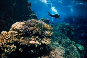 Large coral formations can be found all the best dive sites in Belize