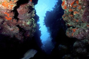 Coral caves you can find when you Scuba Dive in Belize