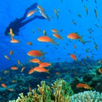 Diver swimming with a school of fish on one of the reasons we offer the best dive sites in Belize