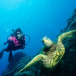 The best dive sites in Belize provide the change to swim with Sea turtles just off the shore of our resort