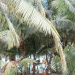 Strolling through the palm trees and gardens at Belize Dive Haven Resort