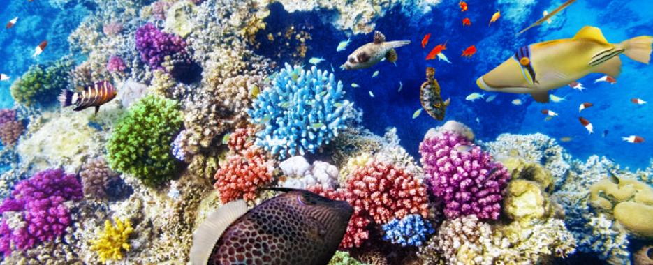 diving season