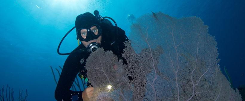 Diver and Fan Coral