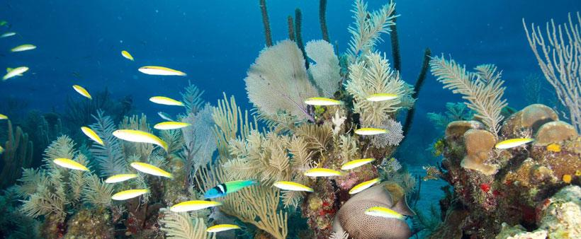 Schools of fish are common sites on scuba dive trips at Belize Dive Haven resort