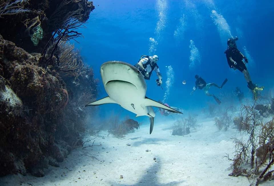 Dive Trip