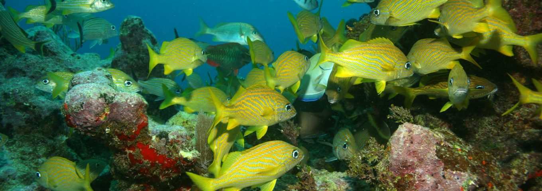 Identify Belize Marine Life