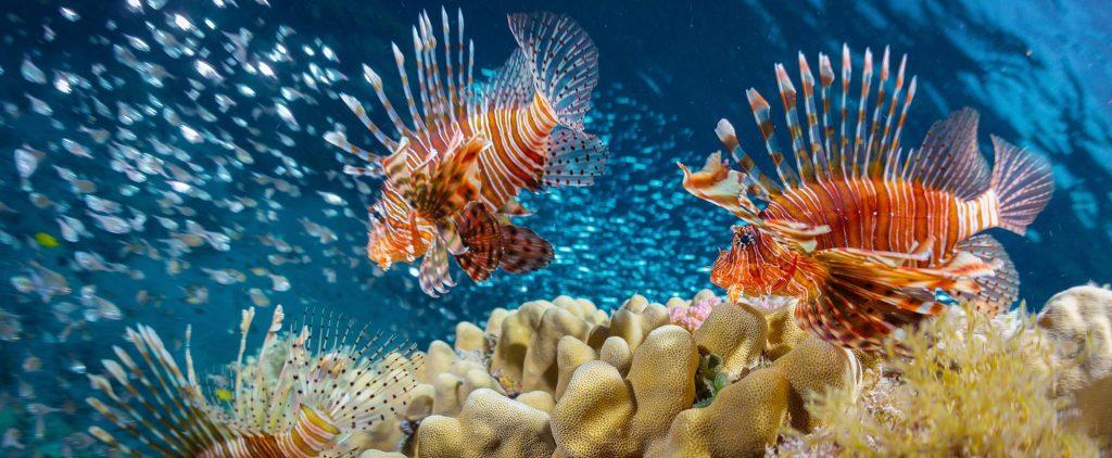 Lionfish Problem Belize